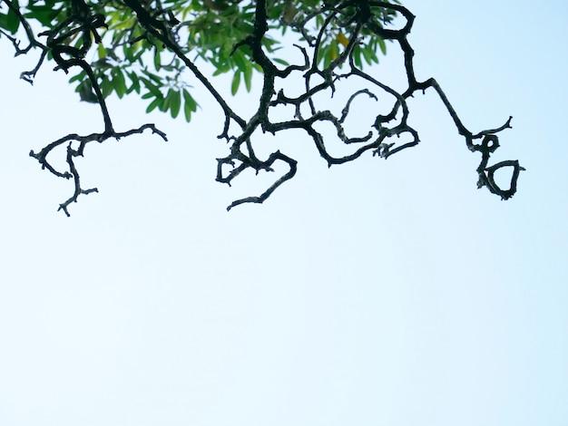 Sylwetka nagie gałęzie i zielone liście