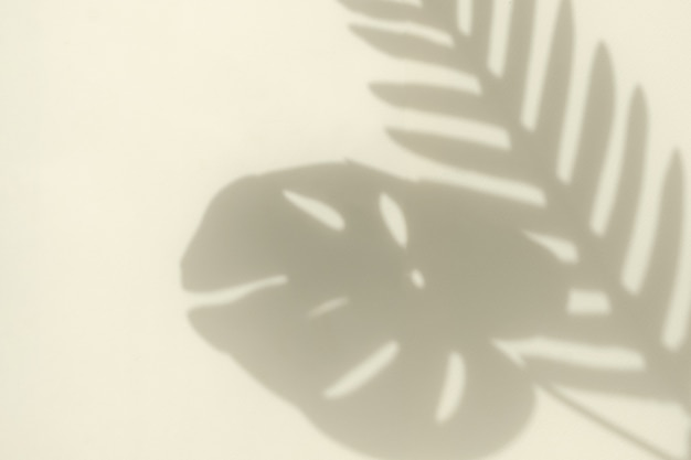 Sylwetka niewyraźnego cienia krzywej gałęzi palmy i liścia monstera od światła słonecznego na jasnożółtym tle i przestrzeni kopii. minimalna koncepcja trendów.