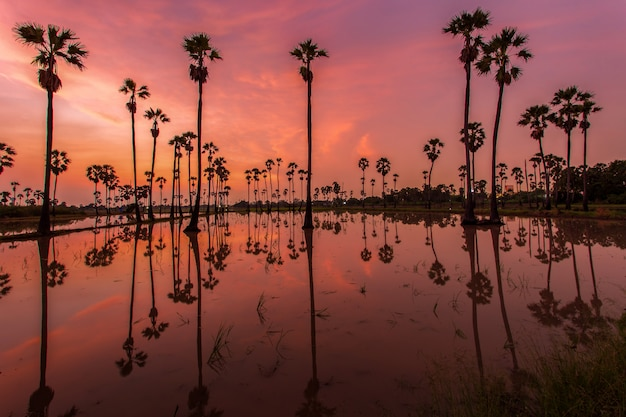 Sylwetka odbicie drzewka palmowego podczas wschodu słońca czasu