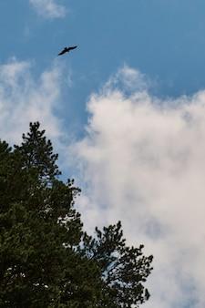 Sylwetka orzeł stepowy latający pod jasnym słońcem i zachmurzonym niebem w lecie.