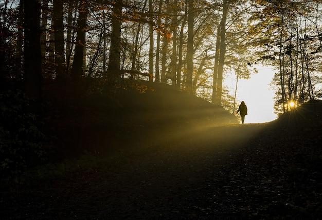 Sylwetka osoby idącej ścieżką między drzewami w ciągu dnia