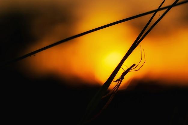 Sylwetka owada o zachodzie słońca