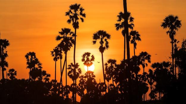 Sylwetka palm cukrowych i latające ptaki o zachodzie słońca. rolnictwo i naturalne tło.