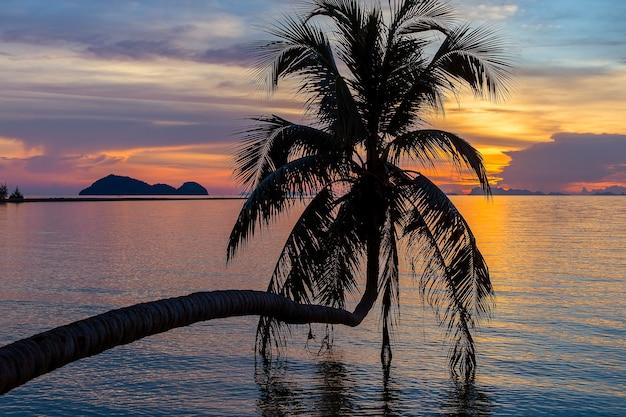 Sylwetka palmy kokosowej o zachodzie słońca na tropikalnej plaży, w pobliżu wody morskiej