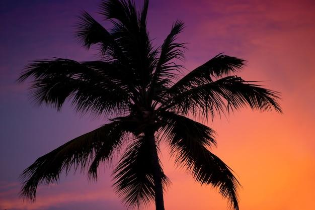 Sylwetka palmy o zachodzie słońca.