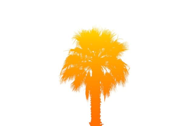 Sylwetka palmy z jasnym gradientem lata na jasny biały na białym tle. koncepcja zwrotnik, wakacje i podróże