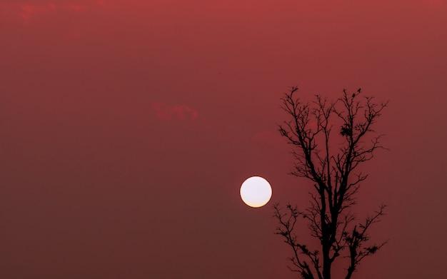 Sylwetka para ptaków na bezlistne drzewa o zachodzie słońca