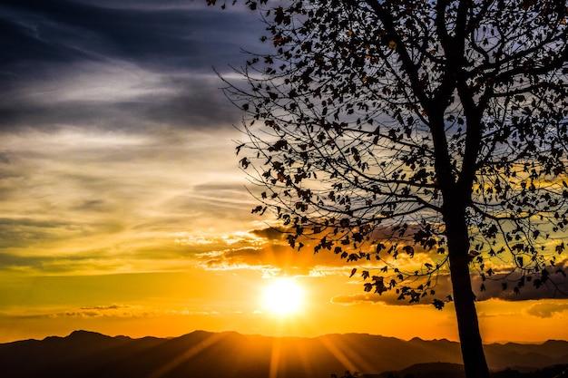 Sylwetka platana o zachodzie słońca