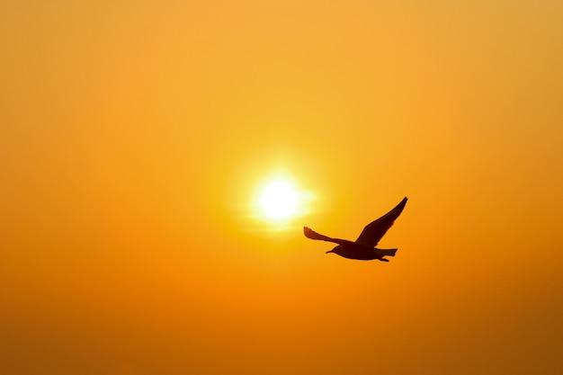Sylwetka ptak zachód słońca