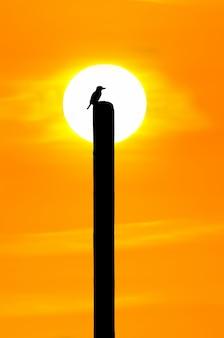 Sylwetka ptaka na drewnie nad jasnym złotym wschodem słońca