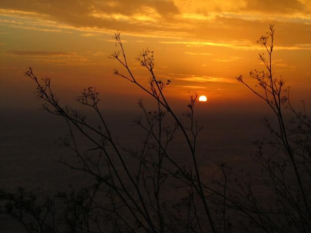 Sylwetka roślin kopru włoskiego podczas zachodu słońca na klifach dingli na malcie