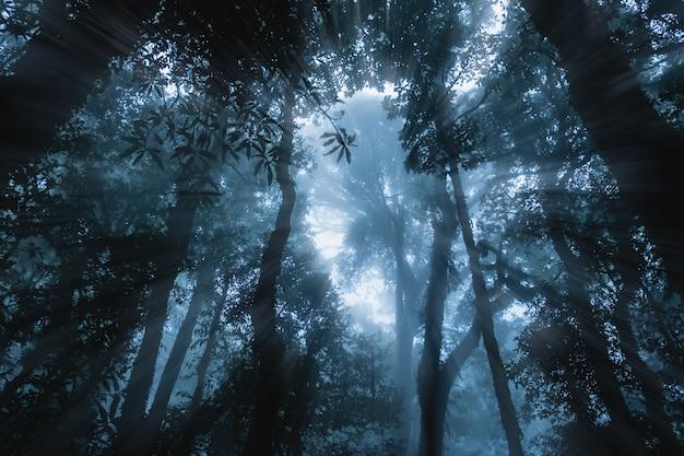 Sylwetka roślina w strasznym lesie