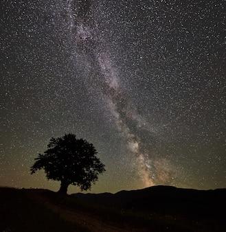 Sylwetka samotnego wysokiego drzewa pod cudownym, gwiaździstym nocnym niebem i mleczną drogą w górach