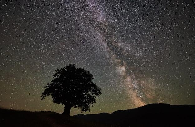 Sylwetka samotnego wysokiego drzewa pod rozgwieżdżonym nocnym niebem