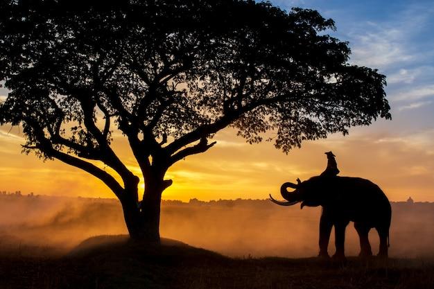Sylwetka słoni w tajlandii w czasie wschodu słońca