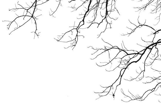 Sylwetka suchych gałęzi drzew