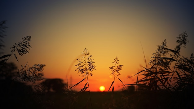 Sylwetka trawy podczas zachodu słońca
