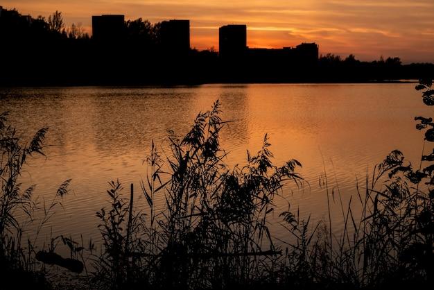 Sylwetka trzciny o zachodzie słońca na falach wody jeziora z krajobrazem miejskim na horyzoncie