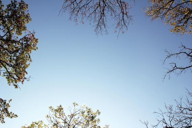Sylwetka upadku kolorowe gałęzie wokół krawędzi z błękitnym niebem w środku i copyspace. wierzchołki drzew w jesiennym lesie