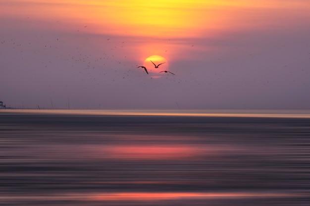 Sylwetka wielkich tabunowych seagulls lata w niebie.