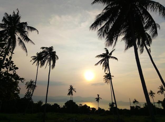 Sylwetki drzew palmowych na tle barwnego nieba zachodu słońca. działka tropikalna.