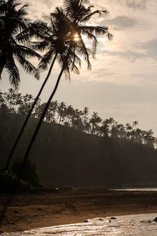 Sylwetki drzew palmowych o wschodzie słońca