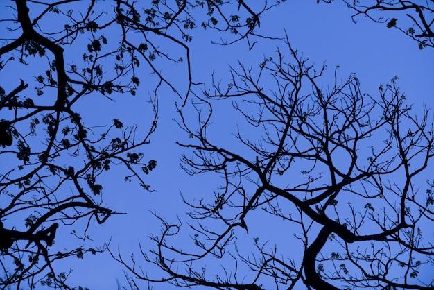 Sylwetki Drzew Z ładnym Tłem Nieba, Las Premium Zdjęcia