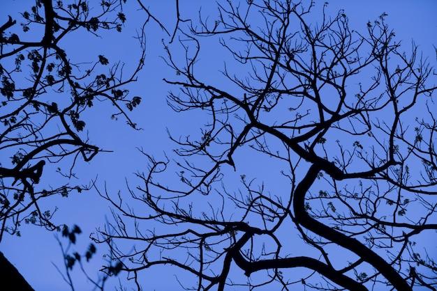 Sylwetki drzew z ładnym tłem nieba, las