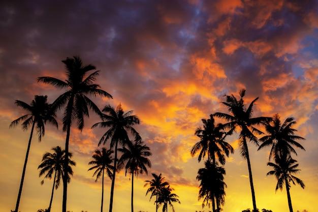 Sylwetki drzewko palmowe na niebie.