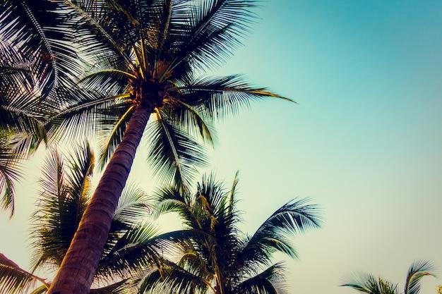 Sylwetki drzewko palmowe z zmierzchem