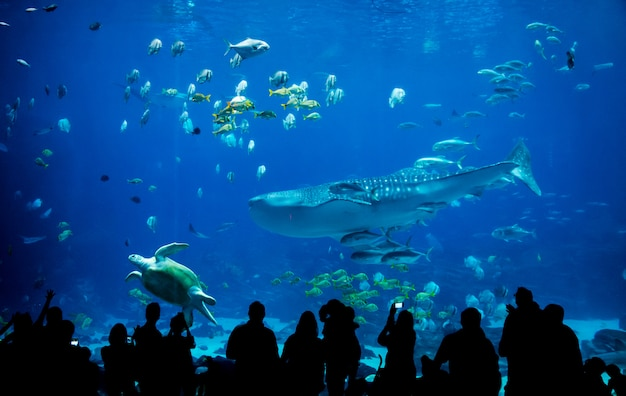 Sylwetki ludzi w wielkim akwarium