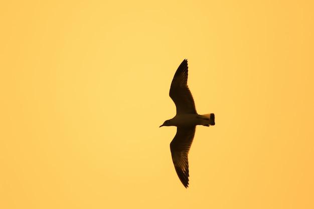 Sylwetki mew latających nad zachodem słońca. , z pięknym pomarańczowym