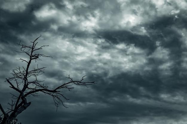 Sylwetki nieżywy drzewo i gałąź na szarym niebie