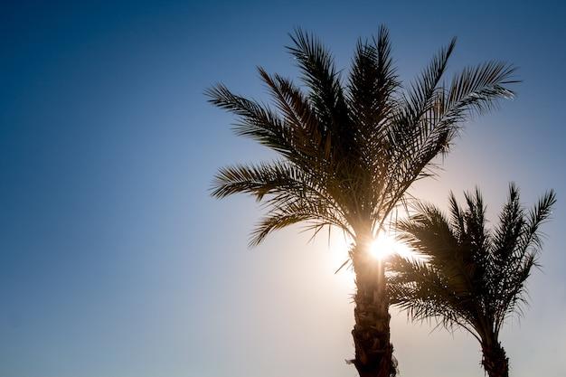 Sylwetki palm na tle nieba podczas tropikalnego zachodu słońca. kopiuj, puste miejsce na tekst.