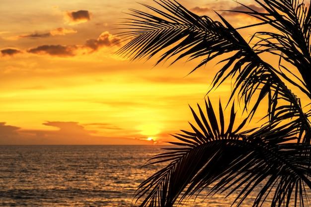 Sylwetki palma opuszcza na niebo oceanu neary dennej plaży przy zmierzchu lub wschodu słońca czasem dla czas wolny podróży i wakacje pojęcia