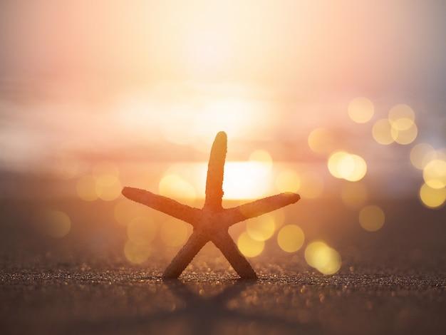 Sylwetki rozgwiazda na piasku przy zmierzch plażą