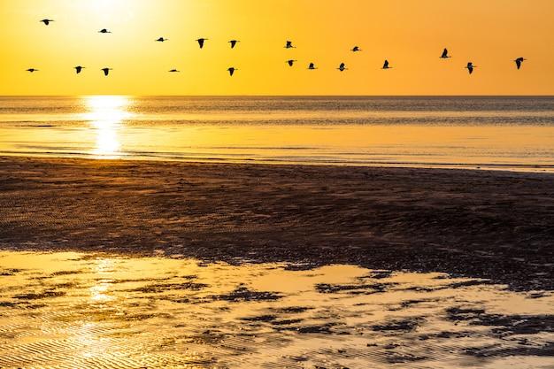 Sylwetki stada gęsi latające po pomarańczowym niebie o zachodzie słońca nad wodą oceanu