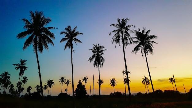 Sylwetkowy kokosowy drzewo podczas zmierzchu