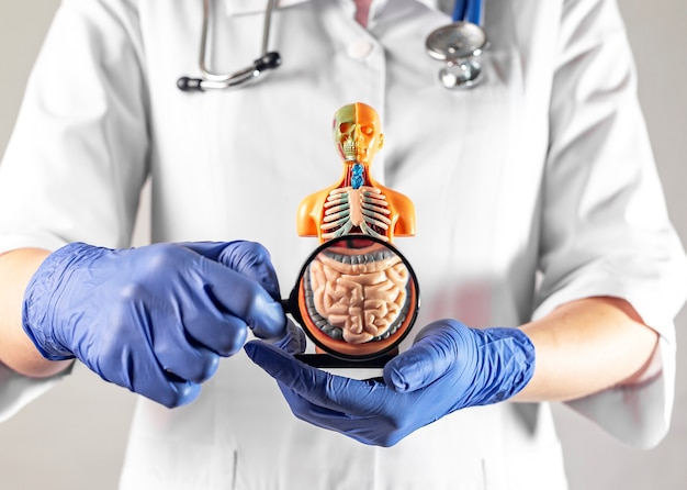 Symbol jelita przez szkło powiększające w koncepcji ręki lekarza dotyczącej diagnostyki i pielęgnacji jelit