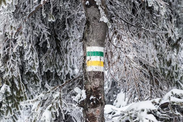 Symbol szlaku pieszego na pniu drzewa w polskich górach