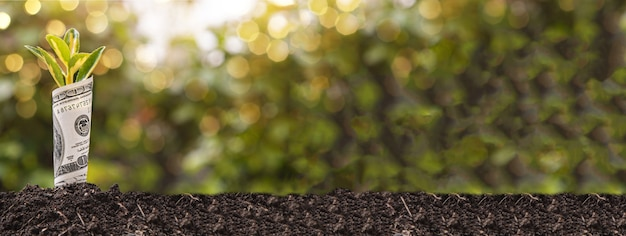 Symbol wzrostu gospodarczego stu dolarowy banknot z rośliną lub liściem wyrastającym z ziemi z niewyraźnym zielonym tłem, obraz banera z miejscem na kopię