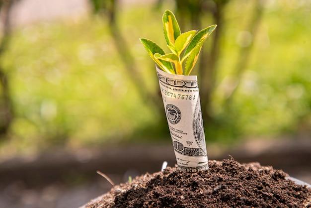 Symbol wzrostu gospodarczego stu dolarowy banknot z rośliną lub liściem wyrastającym z ziemi z rozmytym zielonym tłem