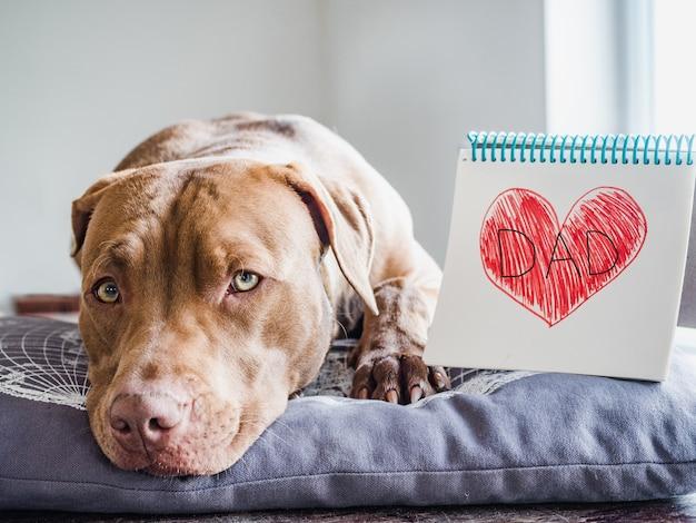 Sympatyczny, śliczny szczeniaczek w czekoladowym kolorze, zeszyt z namalowanym serduszkiem i napisem dad. zbliżenie, w pomieszczeniu, białe tło. gratulacje dla rodziny, krewnych, przyjaciół i współpracowników