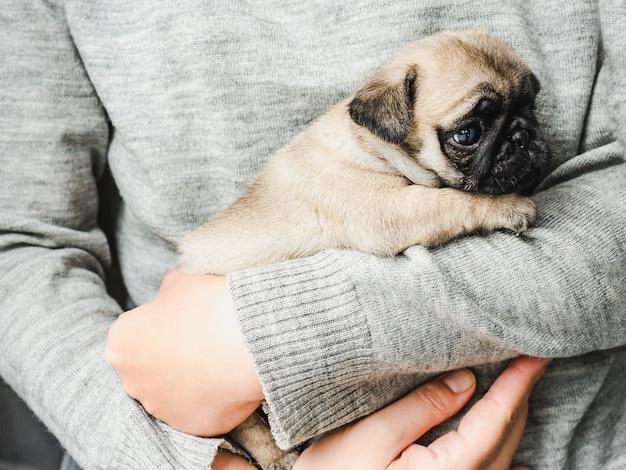 Sympatyczny szczeniak. koncepcja opieki nad zwierzętami