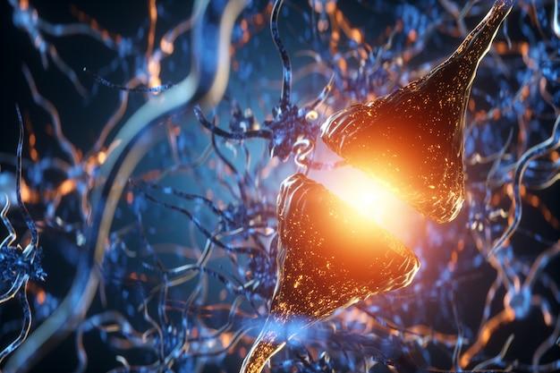 Synapsa i neurony w ludzkim mózgu