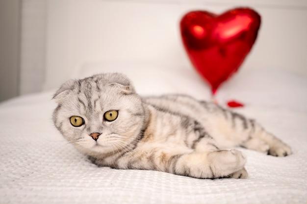 Sypialnia jest udekorowana na walentynki, rasowy kot szkocki zwisłouchy siedzi na łóżku i bawi się balonikiem w kształcie serca.