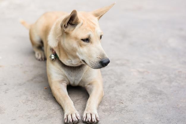 Sypialny pies na cementowej podłoga