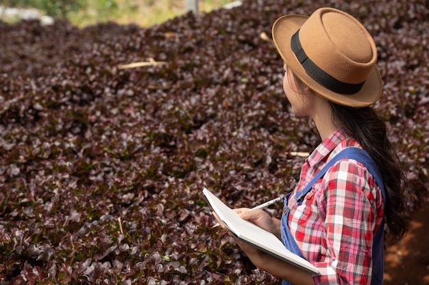 System hydroponiczny, sadzenie warzyw i ziół bez użycia gleby dla zdrowia
