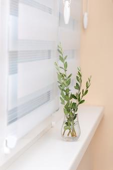 System rolet okiennych, drzewo oliwne w szklanym wazonie, przytulna koncepcja.