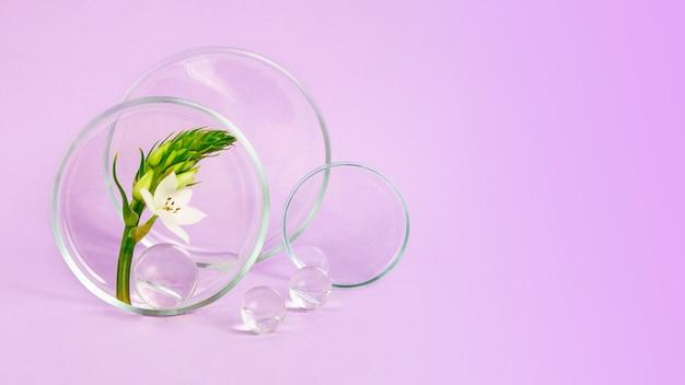 Szalki petriego na fioletowym tle z kwiatami w środkuduży baner